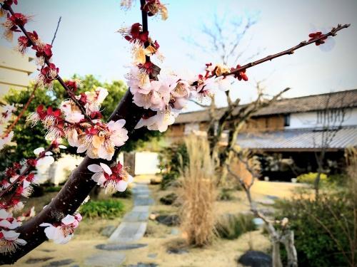 辻利兵衛本店の中庭の桜の花と、背景に移る本館